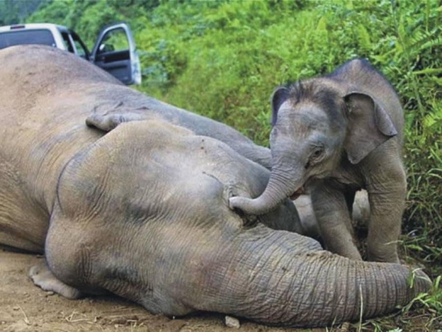 انسانو!ماں کی اہمیت جانوروں سے جانو