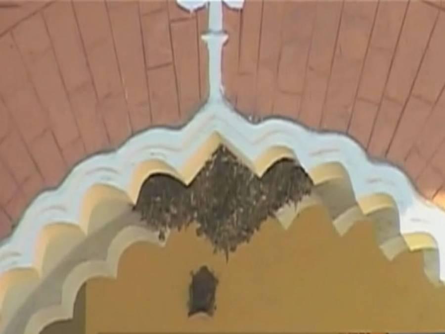 گھڑیاں بتانیوالے تاریخی گھڑیال پرندوں اور مکھیوں کا ٹھکانہ بن گئے