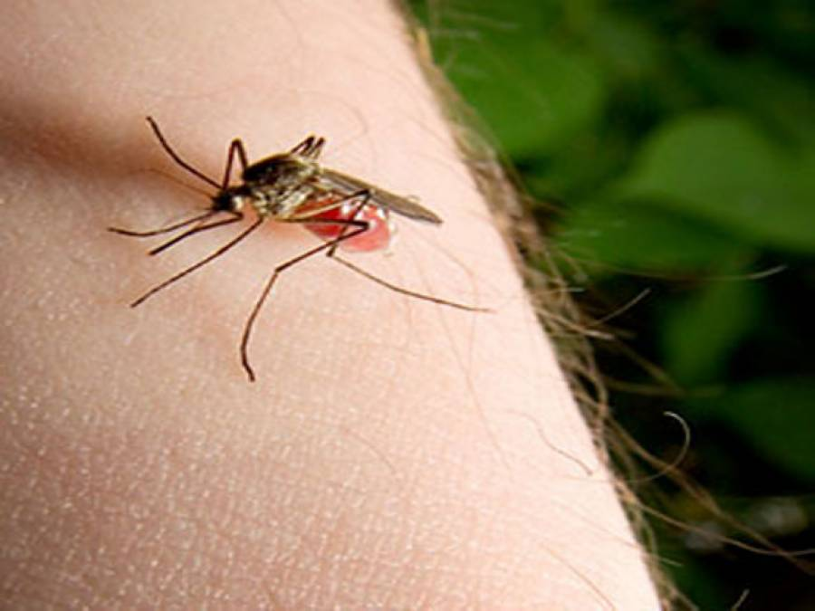 How microaggressions are like mosquito bites