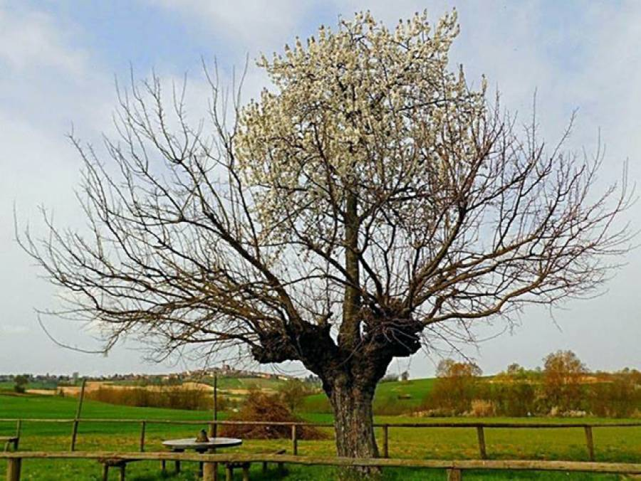 درخت کے اوپر درخت، اٹلی کا علاقہ سیاحوں کی توجہ کا مرکز