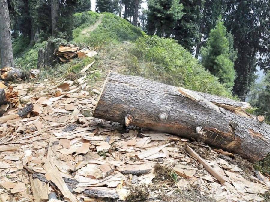 آزادی ، انقلاب دھرنے ،شرکاءنے اسلام آباد کا قدرتی حسن تباہ کر دیا