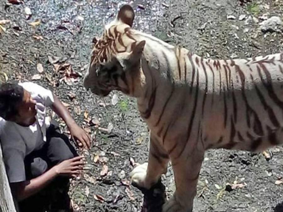 چین میں سرکس کے شیر نے لڑکی کی جان لے لی