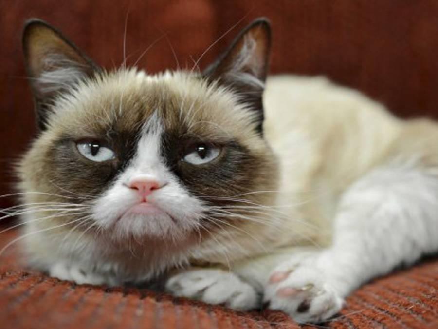 وہ بلی جس نے دو سال میں اپنے مالک کو 10 ارب روپے کا مالک بنا دیا
