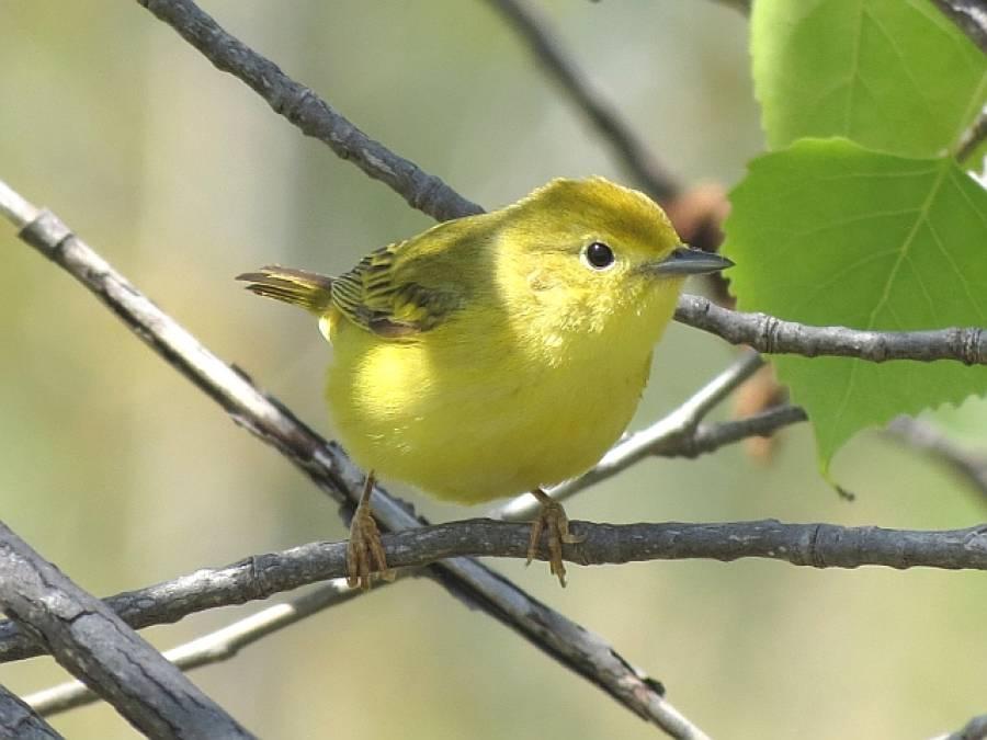 پرندوں کو بروقت کسی بڑی آفت کا پتہ چل جاتاہے:تحقیق