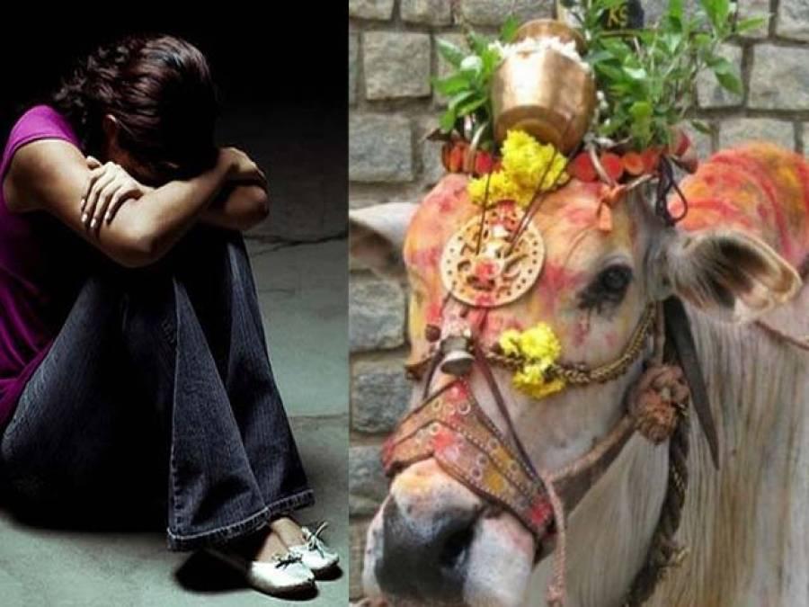 بھارت میں خواتین سے زیادہ گائے محفوظ