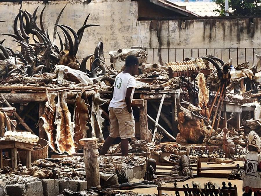 دنیا کا خوفناک ترین بازار جہاں بندروں کے دماغ اور مردہ پرندے فروخت کیے جاتے ہیں تاکہ۔۔۔