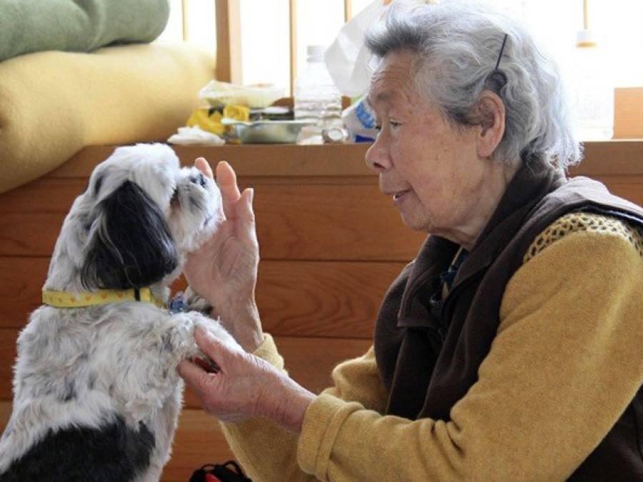 وہ کتیا جس نے اپنی مالکن کو سونامی سے بچا لیا، مگر کیسے؟ ایسی کہانی جس پر انسانی عقل دنگ رہ جائے