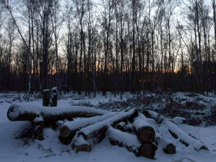 خود کو دس سال تک جنگل میں چھپائے رکھنے والا 'مردہ ' ڈکلیئر نوجوان بالآخر پکڑا گیا