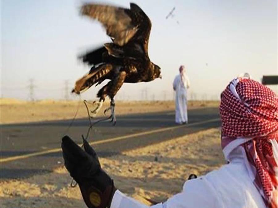 پابندی کے باوجود سعودی شہزادے تلور شکار کیلئے دالبندین پہنچ گئے