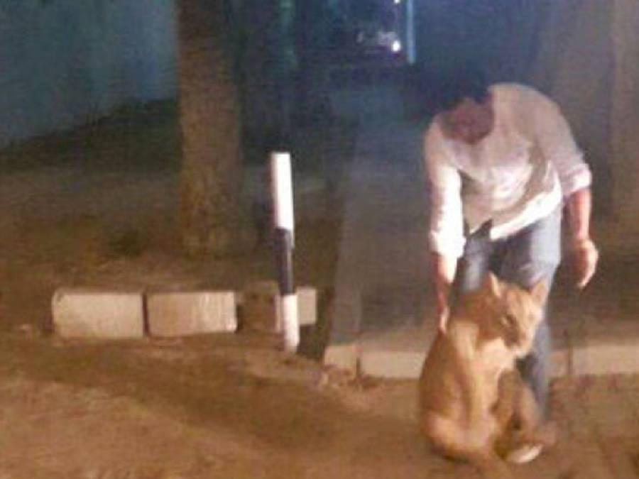 دبئی کی سڑکوں پر ایسی چیز گھومتی پائی گئی کہ شہریوں کے اوساں خطا ہو گئے،پولیس کو بلا لیا گیا اور پھر۔۔۔