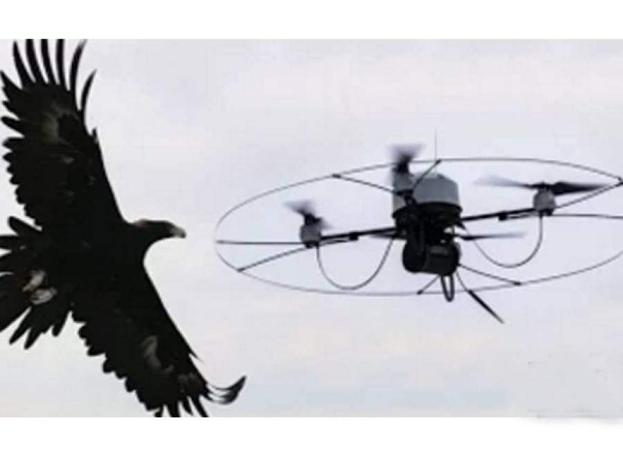 ہالینڈ میں شاہین انجانے ڈرون مار گرانے لگے