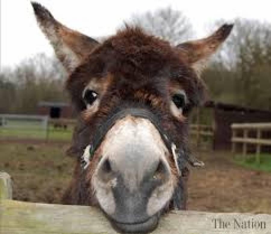 حرام جانوروں کی آلائشوں کی درآمد،ہائی کورٹ نے حکومت سے جواب طلب کرلیا