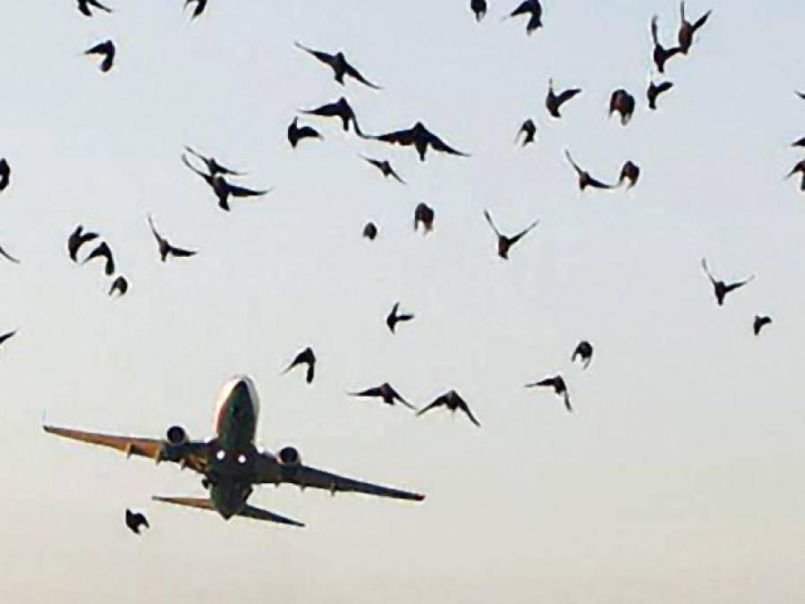 نیو یار ک سے لاہور آنے والی پرواز سے پرندہ ٹکرا گیا ، پائلٹ نے طیارے کو باحفاظت اتار لیا