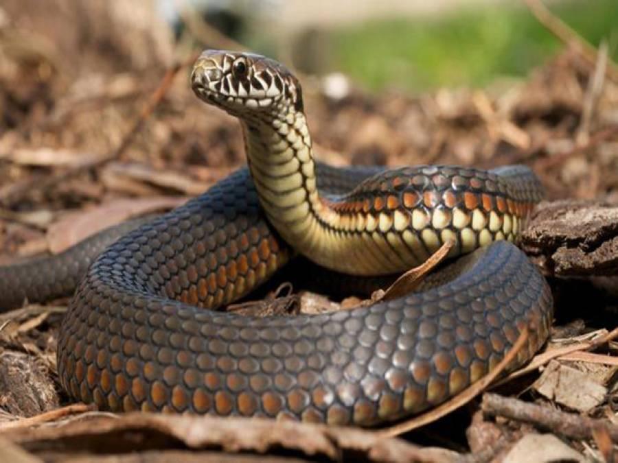 سانپ کے ڈسنے سے 3 بہن بھائی جاں بحق