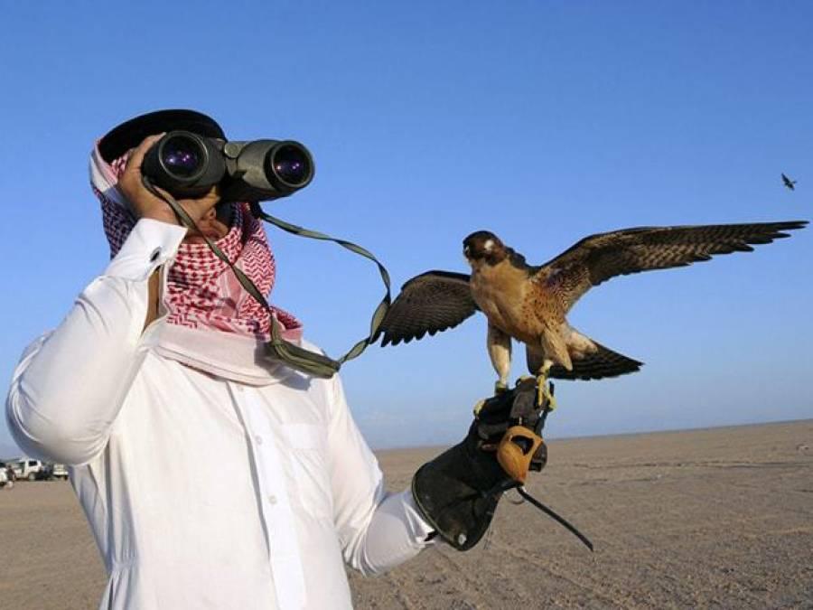 عرب شخصیات کو تلور اور دیگر پرندوں کے شکار کیلئے اجازت نامے جاری