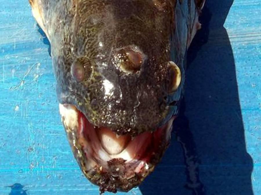 ارجنٹائن میں ایک ایسی مچھلی پکڑ ی گئی کہ مچھیروں کی ہوائیاں اڑ گئیں، پورا شہر ہی خوف سے کانپ اٹھا