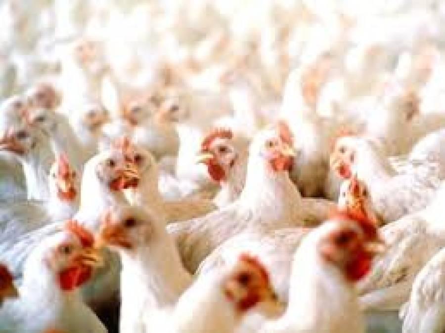 چکن فروشوں کی من مانیاں ،مرغی کی فی کلو قیمت میں ہوشربا اضافہ کردیا