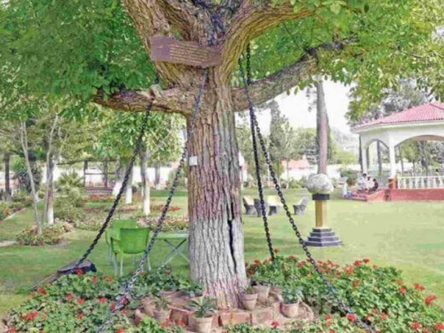 یہ درخت گزشتہ 118سال سے پاکستان میں گرفتار ہے، وجہ ایسی کہ جان کر آپ کی حیرت کی کوئی انتہا نہ رہے گی