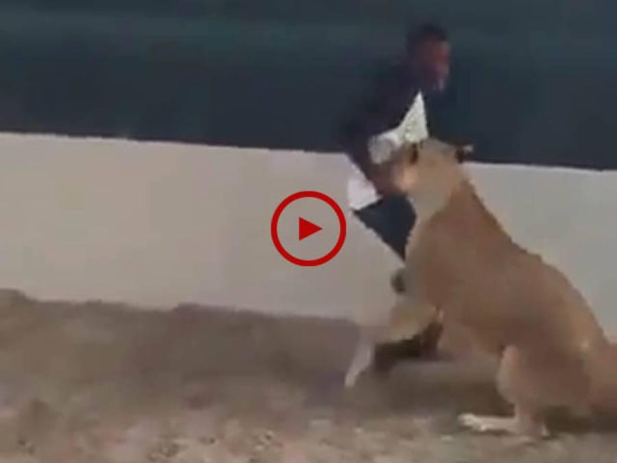 یہ لوگ اس خونخوار جانور کیساتھ کھیل رہے ہیں یا ڈر کر اپنی جان بچا رہے ہیں، ویڈیو دیکھ کر فیصلہ کریں۔ ویڈیو: ناظم علی۔ ساہیوال