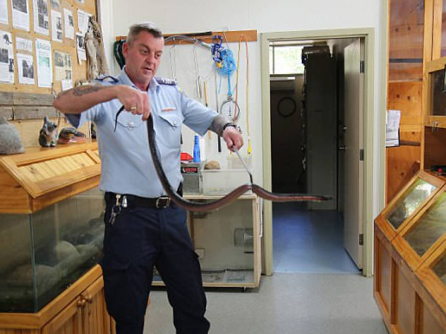 یہ سانپ کوئی عام سانپ نہیں بلکہ ایسی شرمناک عادت میں مبتلا ہے کہ پولیس نے گرفتار کرلیا، کیا عادت ہے؟ جان کر آپ بھی کانوں کو ہاتھ لگالیں گے