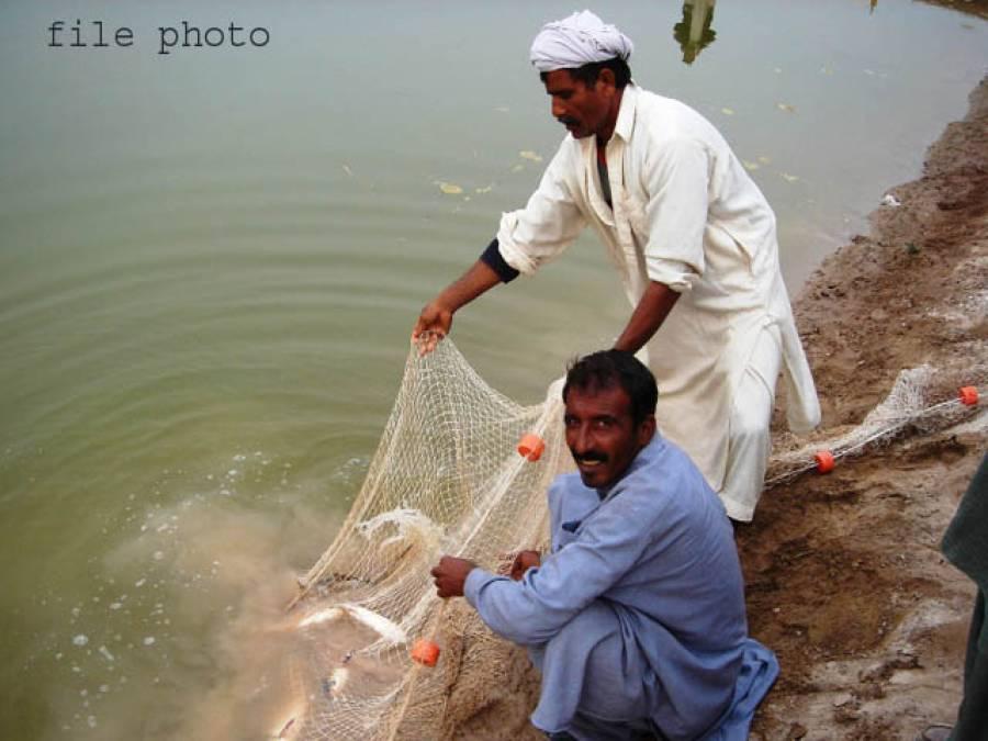 دریائے چناب سے 5 فٹ لمبی،50 کلو وزنی مچھلی پکڑ لی گئی