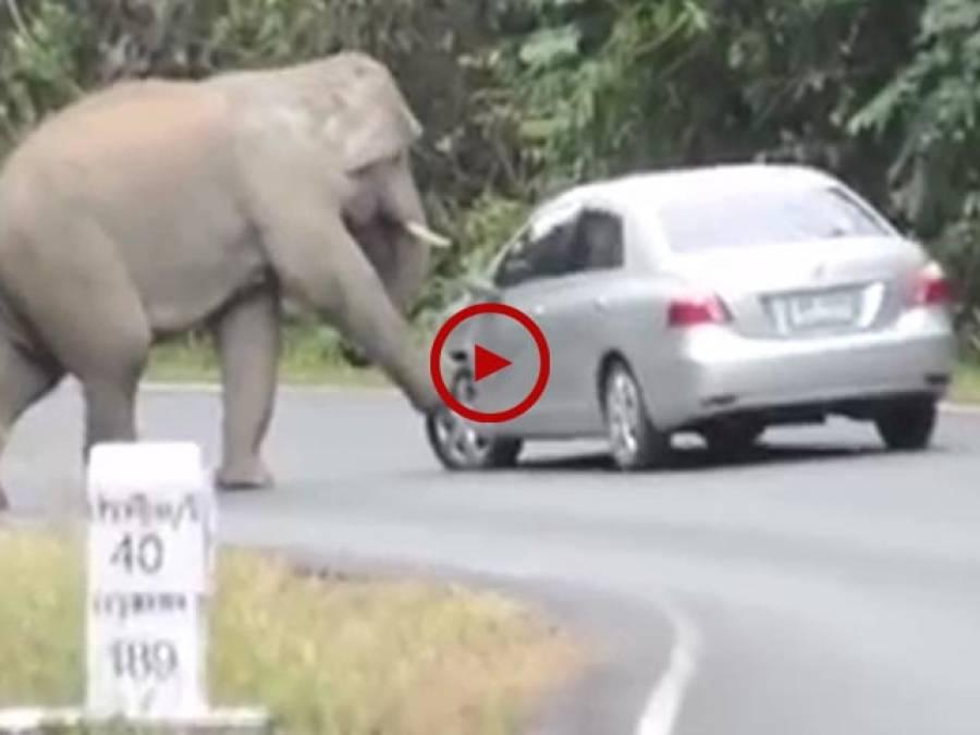 اس ویڈیو میں دیکھیں جنگلی ہاتھی سڑک پر کیسے تباہی مچا رہا ہے۔ بہت زبردست ویڈیو۔ ویڈیو: حسن فاروق۔ لاہور