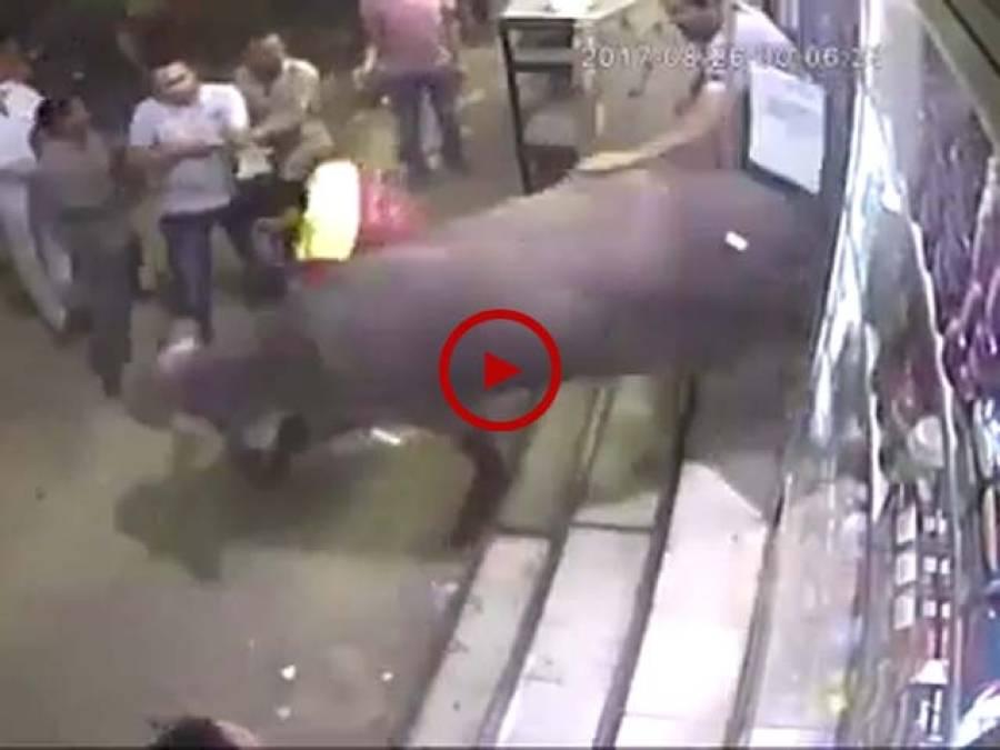 ویڈیو میں دیکھیں ناراض بیل ایسا بے قابو ہوا کہ اس نے نہ صرف لوگوں کا برا حال کیا بلکہ قریبی دکان کو بھی نقصان پہنچایا۔ ویڈیو: علی رزاق۔ لاہور