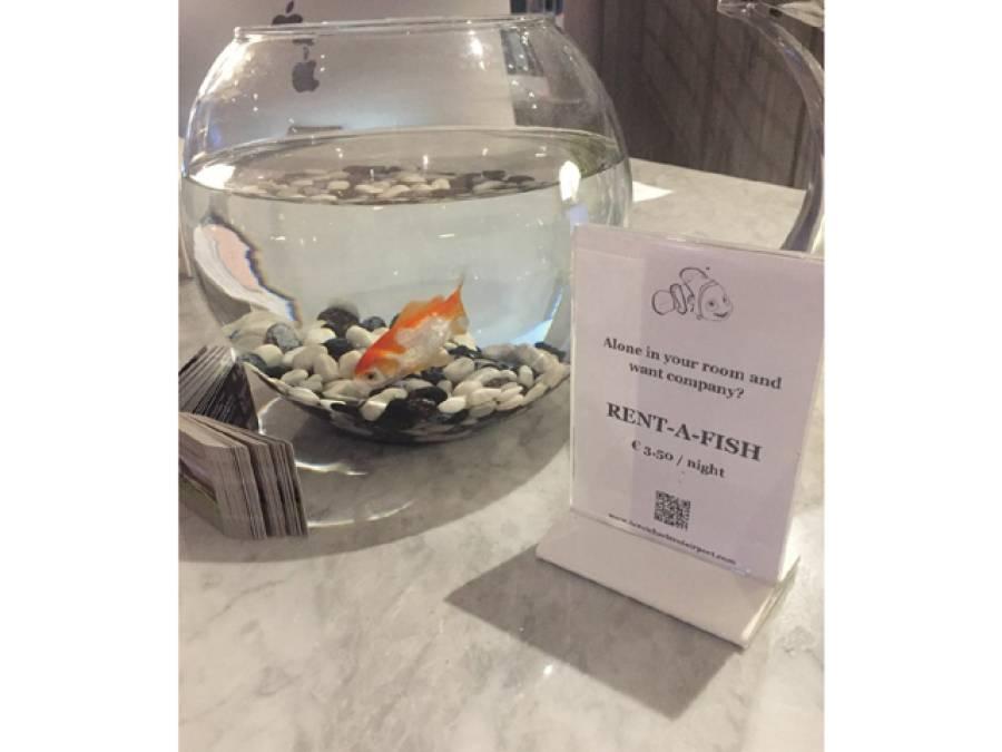 وہ ہوٹل جہاں آپ پیسے دے کر مچھلی کے ساتھ رات گزار سکتے ہیں، لیکن کیوں؟ جان کر آپ بھی حیران پریشان رہ جائیں گے