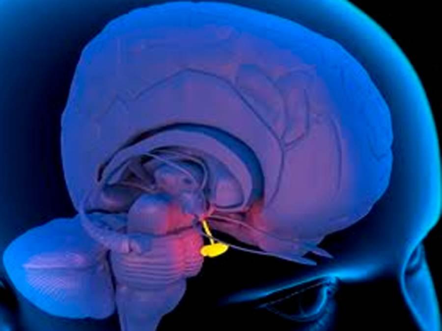 مردوں میں زنانہ پن اور قد چھوٹا رہ جانے کی وجہ ، دماغ کے اندر یہ چھوٹی سی چیز ذرا سی بگڑ جائے توبڑے مسائل پیدا کرتی ہے