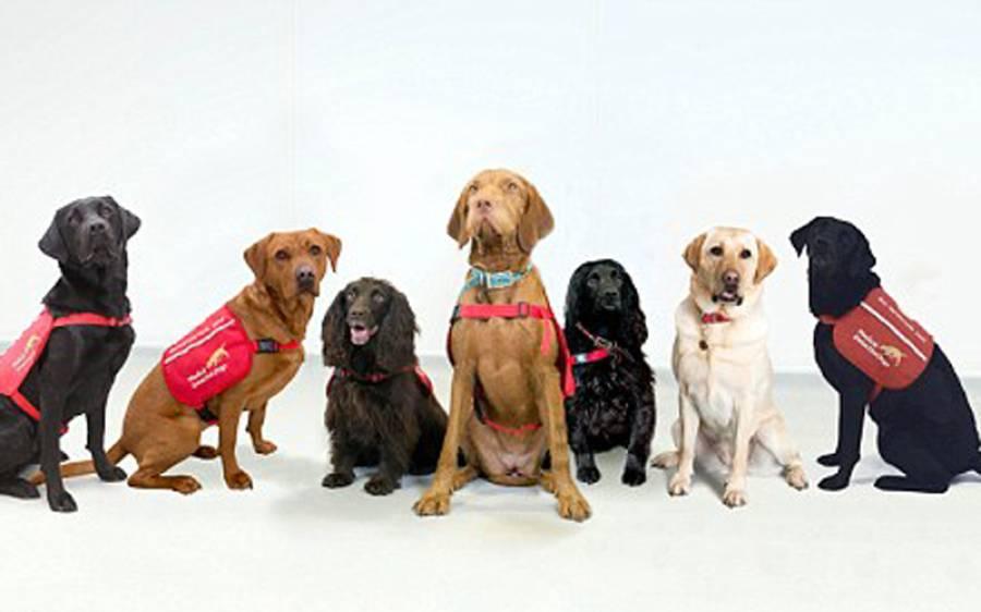 مردوں کو شکار کرنے والا خطرناک ترین کینسر جس کی تشخیص کتے سونگھ کر ہی کر لیتے ہیں، وہ بات سامنے آگئی جو لاکھوں مردوں کی زندگی بچاسکتی ہے