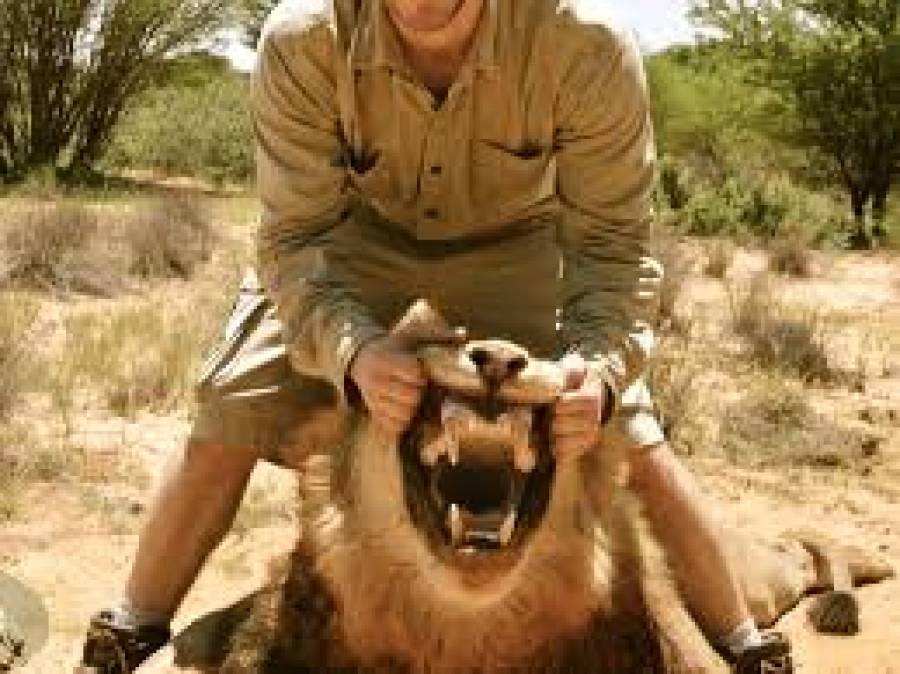 جنگل،شیر اور شکاری