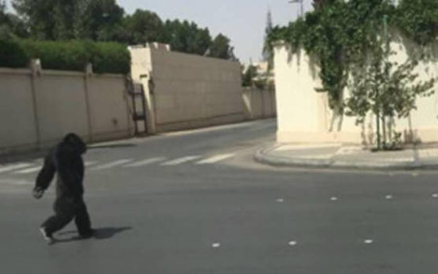 سعودی عرب میں ریاض کی سڑکوں پر اچانک ایسی چیز آگئی کہ کھلبلی مچ گئی، لوگوں میں خوف و ہراس کیونکہ۔۔۔