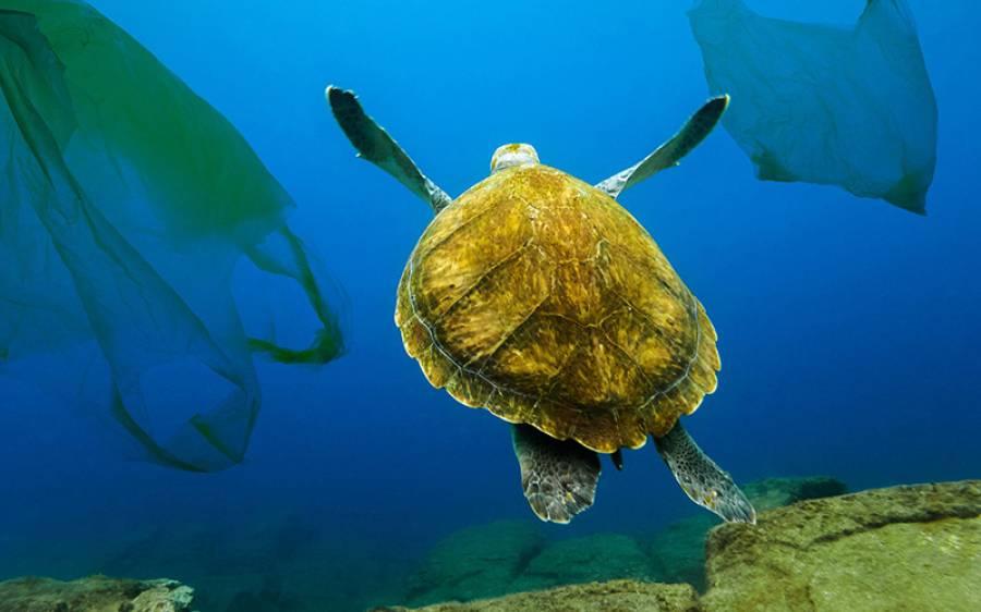 سمندروں میں بسنے والے کچھوﺅں کا تجزیہ، ماہرین کو ان کے پیٹ میں کیا چیز ملی؟ جان کر ہر انسان افسردہ ہوجائے