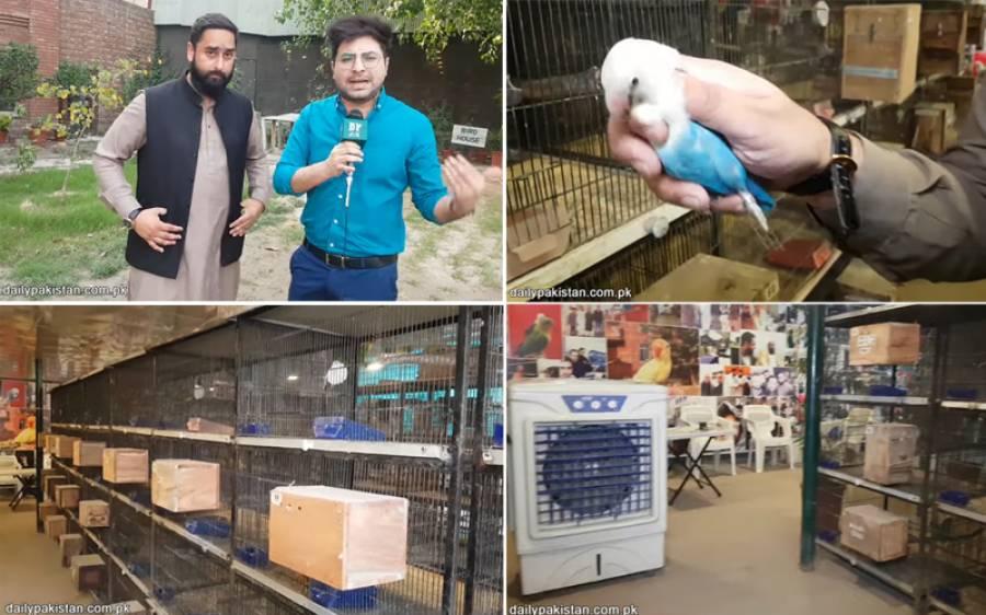 طوطے بیچ کر کروڑوں روپے کمانے والے پاکستانی کی دلچسپ کہانی