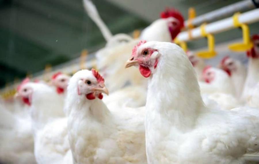 پنجاب حکومت کے دعوے غلط، عید پر مرغی کا گوشت کتنے روپے کلو فروخت ہو رہا ہے؟ جان کر ہی آپ پریشان ہو جائیں