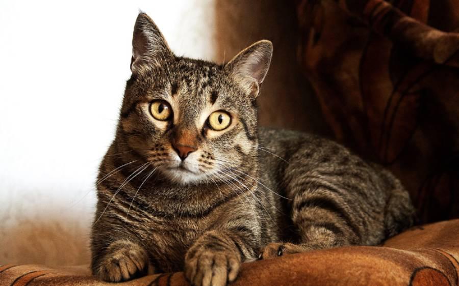 بلیوں کی وجہ سے شادی کے 45 سال بعد جوڑے میں طلاق ہوگئی