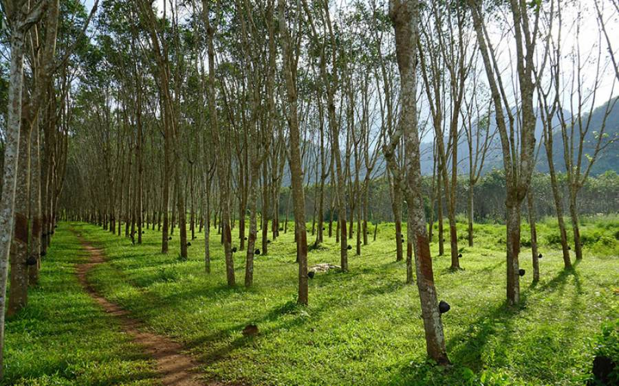 وہ ملک جس نے عمران خان کا 10 ارب درختوں کا ریکارڈ توڑنے کا اعلان کردیا، 4 سال میں کتنے پودے لگائیں گے؟