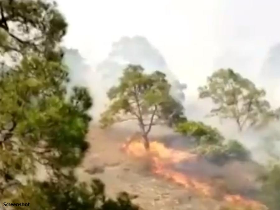 آزادکشمیر کے جنگلات میں لگی آگ بے قابو،کتنا رقبہ لپیٹ میں آچکا؟ افسوسناک خبر