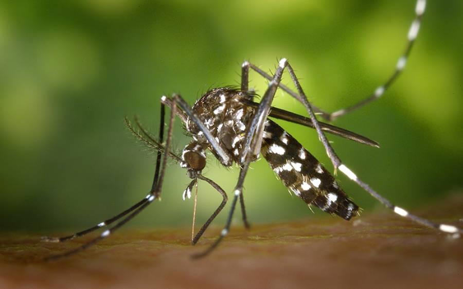 مچھر کی تھوک سے ویکسین کی تیاری، بڑی خوشخبری آگئی