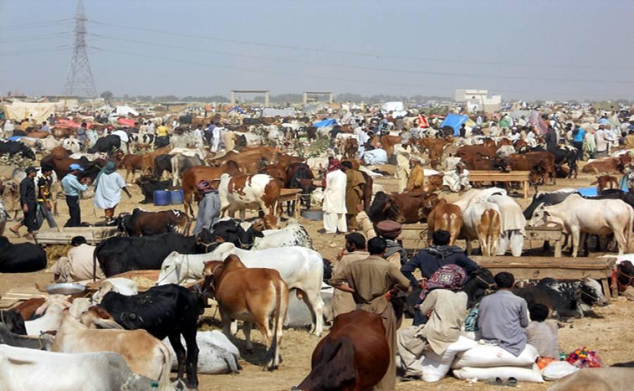 عیدالاضحی کیلئے مویشی منڈیوں کے اوقات کار جاری کر دئیے گئے