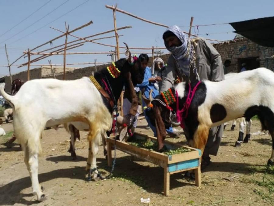شہری حدود میں مویشیوں کی خرید و فروخت،وزیر اعلیٰ پنجاب نے بڑا حکم جاری کر دیا