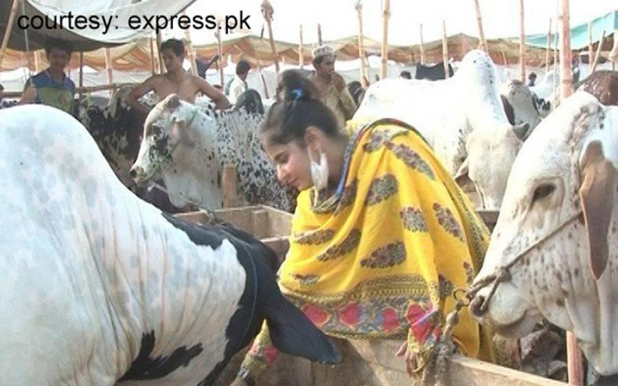 مویشی منڈی میں نوجوان پاکستانی لڑکی بھی جانور فروخت کرنے آگئی