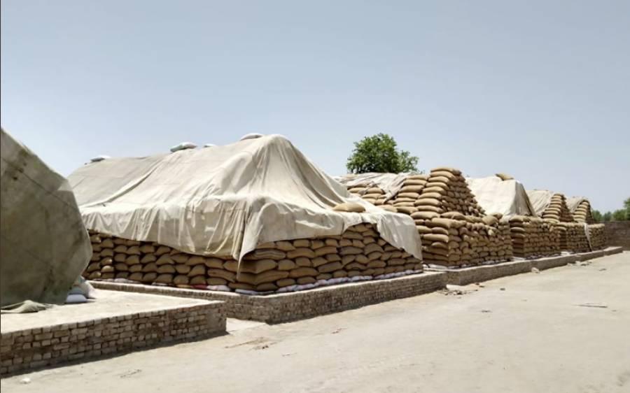 سندھ حکومت کا گندم کی ذخیرہ اندوزی پر سخت ایکشن کا فیصلہ