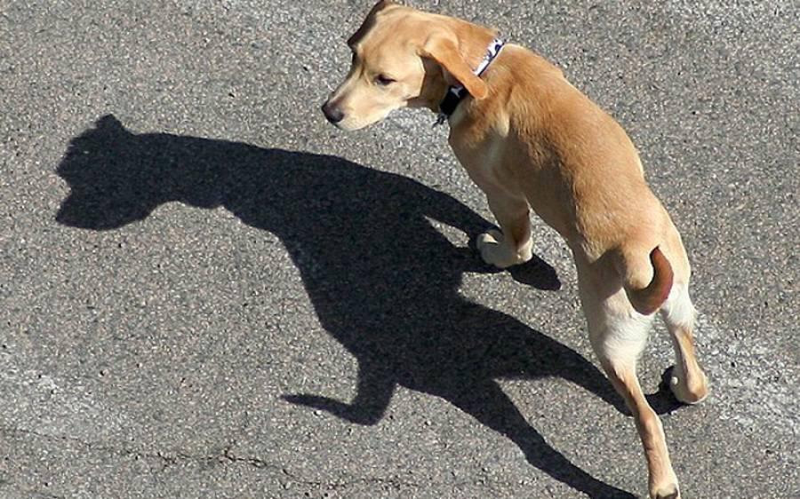 کتے نے 12 کلومیٹر دوڑ کر قاتل کو ڈھونڈ نکالا، مگر کیسے؟ طریقہ جان کر آپ کی بھی حیرت کی انتہا نہ رہے