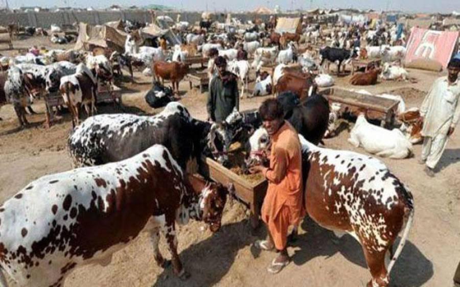 عید الاضحیٰ کی چھٹیوں کا نوٹیفکیشن جاری، کتنی تعطیلات ہوں گی؟ پاکستانیوں کے منہ اتر جائیں