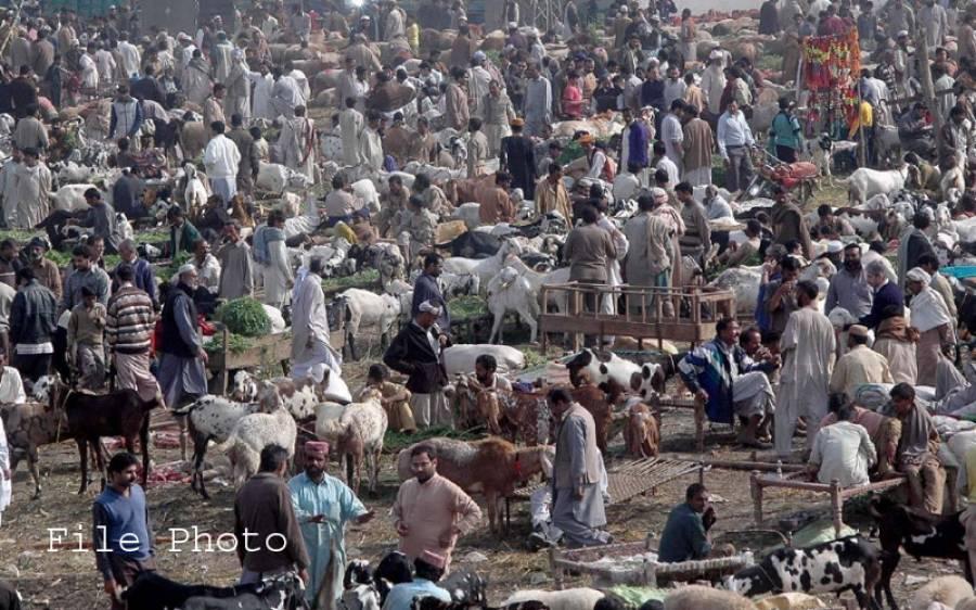 عید الاضحی قریب آتے ہی مویشی منڈیوں میں رش لگ گیا، احتیاطی تدابیر نظر انداز