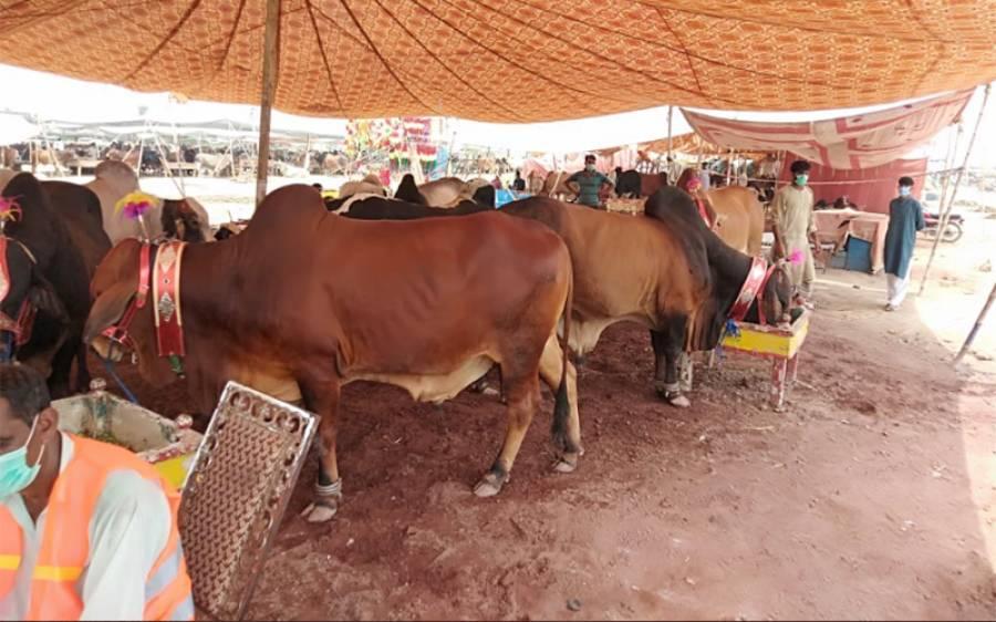 عید الاضحی پر جانوروں کی آلائشیں اکٹھی اور انکی تلفی کیلئے جامع پلان تشکیل