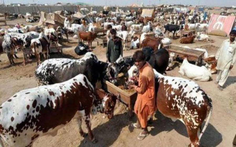 سندھ حکومت نے عیدالاضحیٰ کی تعطیلات کا اعلان کردیا، کتنی چھٹیاں دی ہیں؟ ملازمین کیلئے بڑی خبر آگئی