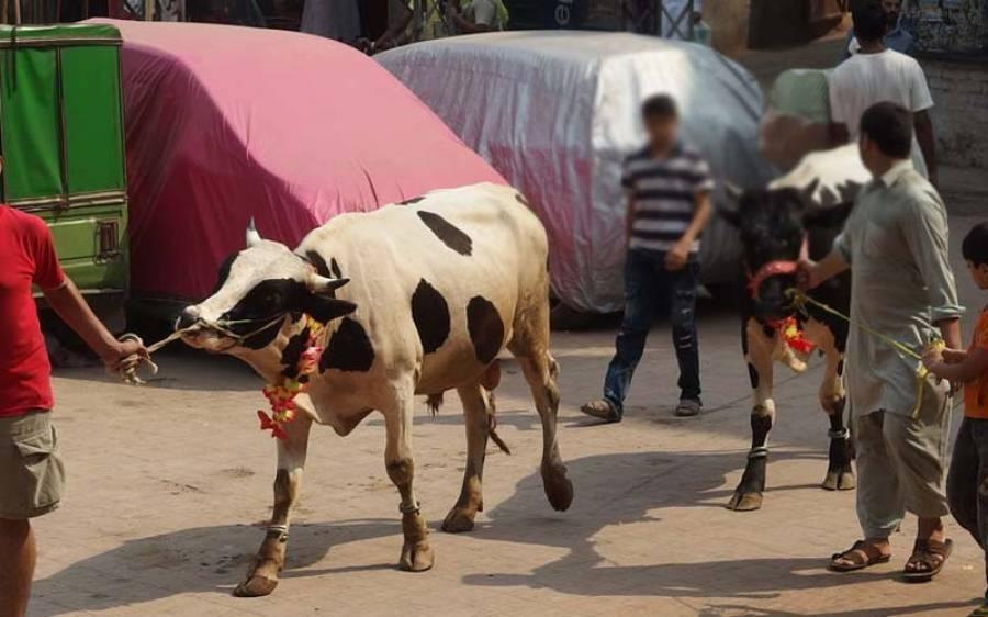 پاکستان کے وہ علاقے جہاں آج عید الا ضحی منائی جارہی ہے