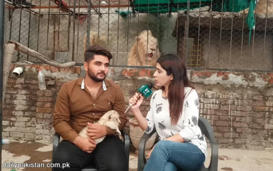 وہ شہری جس نے اپنے گھر کی چھت پر 5 شیر پال رکھے ہیں، شوق کو کاروبار بھی بنا لیا